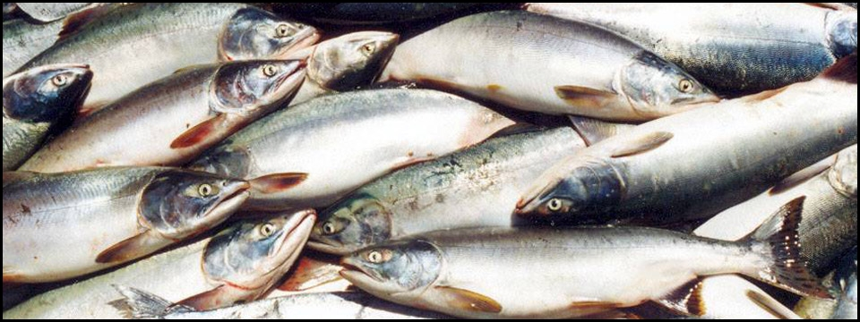 Ооо приморский рыбак
